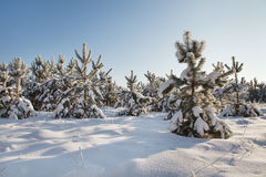 Vinter landscape Stock Photography
