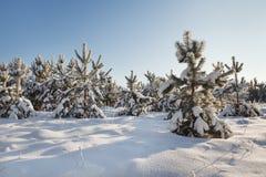 Vinter landscape Stock Photography