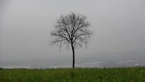 Vinter Landskapet är ett ensamt träd i dimman Mörk regnig dag December Tyskland arkivfilmer