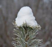 Vinter - naturunder Arkivbild