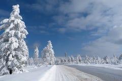 Vinter nytt år Arkivbild