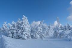 Vinter nytt år Arkivfoto