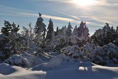 Vinter nytt år Royaltyfria Bilder