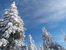 Vinter nytt år Royaltyfri Bild