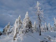 Vinter nytt år Royaltyfria Foton