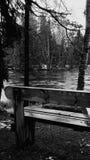 Vinter och ensam bänk royaltyfria bilder
