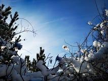 Vinter och himmelbakgrund eller ram fotografering för bildbyråer