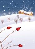 Vinter och nypon Arkivfoton
