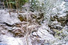 Vinter och snölandskap på monteringen Rainier National Park, paradis royaltyfri bild