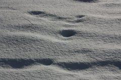 Vinter och snow Arkivfoto