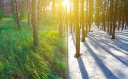 Vinter- och sommarskog på solnedgången arkivbilder