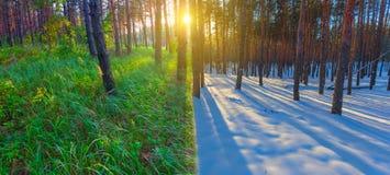 Vinter- och sommarskog på solnedgången arkivbild