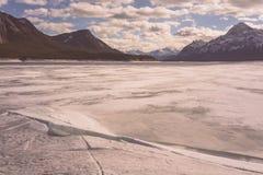 Vinter på Abraham Lake Arkivfoton