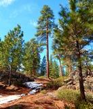 Vinter på Rocky Gap arkivbild
