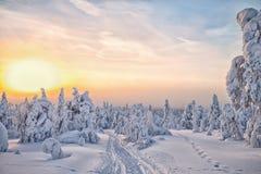 Vinter på Lapland HDR Arkivfoton