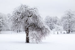 Vinter in the park Royalty Free Stock Photos