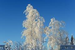 Vinter räknade rimfrosttrees Arkivfoton