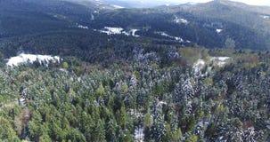 Vinter Rolling Hills till horisonten Flyg- sikt för pinjeskog lager videofilmer