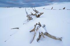 Vinter Silver Lake sanddyn Royaltyfri Bild