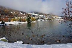 Vinter sjö med änder Arkivbilder