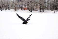 Vinter sjö med en slågen in fågel Royaltyfria Bilder