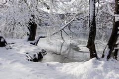 Vinter sjö nedanför deklädda träden Arkivbilder