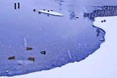 Vinter snö Dammet är en livsmiljö för fåglar Royaltyfri Foto