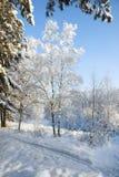 Vinter snö-täckt skog på en solig dag Arkivbilder