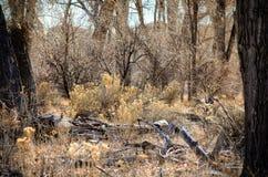 Vinter som är scenisk av Forest Floor på sjöPueblodelstatsparken, Colorado Royaltyfri Fotografi