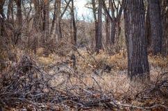 Vinter som är scenisk av Forest Floor på sjöPueblodelstatsparken, Colorado Royaltyfria Bilder