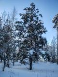Vinter som ?r solig, sn?, istappar, linje royaltyfri fotografi