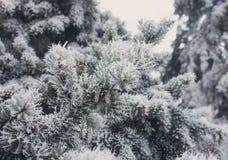 Vinter som glaseras på spruce jultreenärbild Royaltyfri Foto
