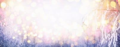 Vinter Sunny Background med snöig filialer royaltyfri fotografi