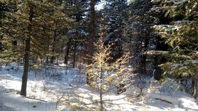 Vinter utomhus i mitt liv Arkivfoton