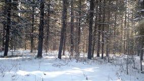 Vinter utomhus i mitt liv Royaltyfri Bild
