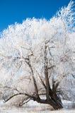 Vinter vinter-tidvatten, vinter-Time Royaltyfria Foton