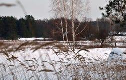 Vinter vissnat gräs, övergav hus på kanten av för arkivfoto