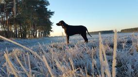 Vinter Wiese Arkivbilder