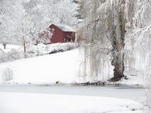 Vinter Willow Tree och liten röd ladugård i snö royaltyfria foton