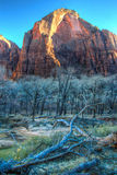 Vinter Zion Mountain som inramas av filialer Royaltyfria Foton