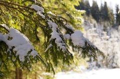 Vinteraffärsföretag Snöig skog Carpathians ukraine arkivbild