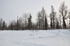 Vinterafton och frostig landskape från nord Nakna träd, sörjer och vit snö Fotografering för Bildbyråer