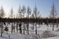 Vinterafton och frostig lanskape från nord Royaltyfri Fotografi