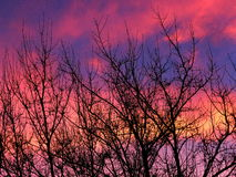 Vinteraftonhimmel Royaltyfria Foton