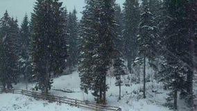 Vinterantenn av ung bröllopparspring och hagyckel som rymmer händer i tungt vintersnöfall in mot gran eller arkivfilmer