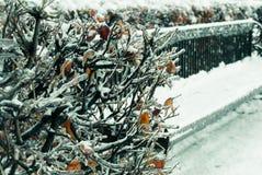 Vinterbänk Fotografering för Bildbyråer