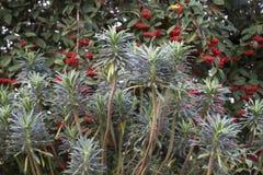 Vinterbär och växter Arkivbilder