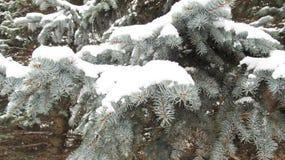 Vinterbakgrund av blått sörjer träd Arkivfoto