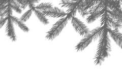 Vinterbakgrund av skuggor förgrena sig av fer-träd på en vit vägg Vitt och svart för samkopiering ett foto eller en modell fotografering för bildbyråer
