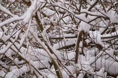 Vinterbakgrund - filialer som täckas med snö royaltyfria foton